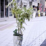 おしゃれな観葉植物