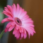 ★主張形態4-中程度の主張のお花の取扱説明書