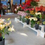 生徒さんが花屋をオープンしました。